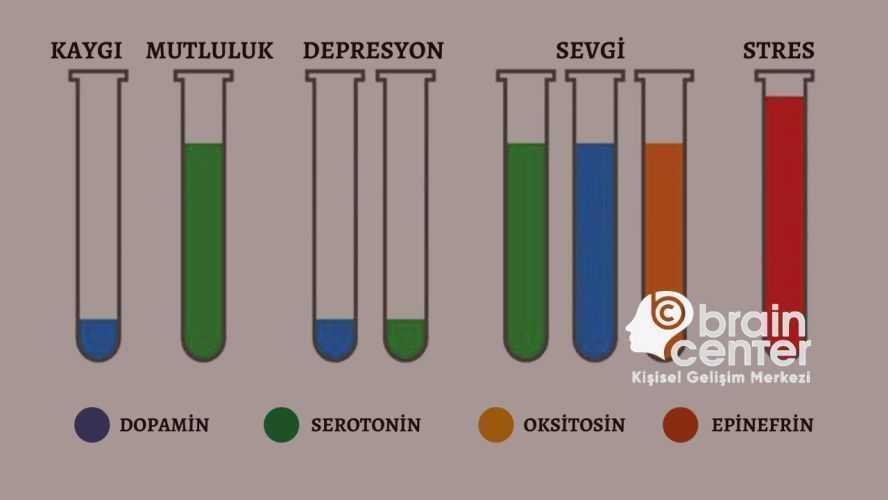 Mutluluk hormonu olarak bilinen hormon